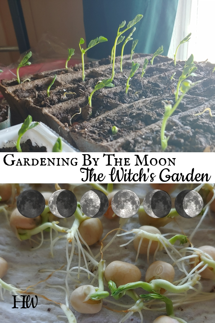Witch Garden Magic Moon Signs